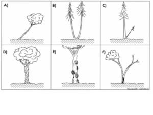 Krankheiten an Bäumen durch Wasseradern