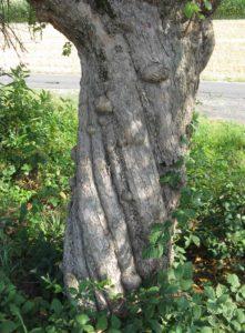 Wasserader am Baum
